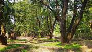 Have the Fun of your own Mango Farm Plots in Konkan